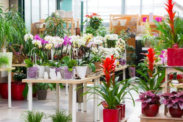 Botanikbereich